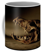 An Old Coyote Skull, Canis Latrans Coffee Mug