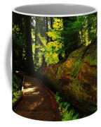 An Old Fallen Tree Coffee Mug