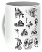 Anatomy: Human Ear Coffee Mug