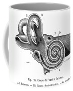 Anatomy: Middle Ear Coffee Mug