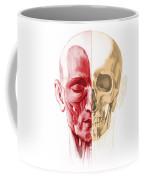 Anatomy Of A Male Human Head, With Half Coffee Mug