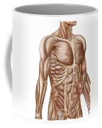 Anatomy Of Human Abdominal Muscles Coffee Mug