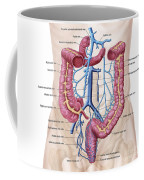 Anatomy Of Human Abdominal Vein System Coffee Mug