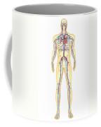 Anatomy Of Human Body And Circulatory Coffee Mug by Stocktrek Images