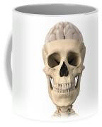 Anatomy Of Human Skull, Cutaway View Coffee Mug