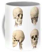 Anatomy Of Human Skull From Different Coffee Mug
