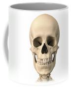 Anatomy Of Human Skull, Front View Coffee Mug