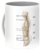 Anatomy Of Human Vertebral Column, Left Coffee Mug