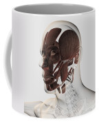 Anatomy Of Male Facial Muscles, Side Coffee Mug