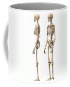 Anatomy Of Male Human Skeleton, Side Coffee Mug
