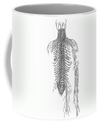 Anatomy: Spinal Nerves Coffee Mug