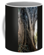 Ancient Old Fine Olive Tree 6 Mountain Spain  Coffee Mug