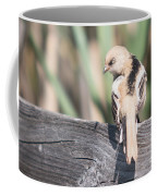 Angry Bird Bearded Reedling Juvenile Coffee Mug