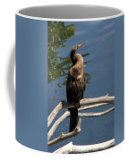 Anhinga Immature Coffee Mug