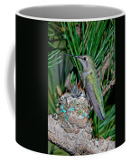 Annas Hummingbird With Young Coffee Mug