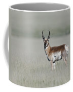 Antelope Buck Coffee Mug