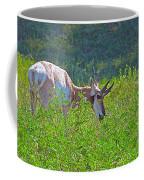 Antelope Near Wildlife Loop Road In Custer State Park-south Dakota- Coffee Mug