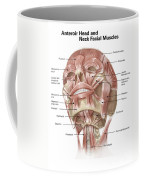 Anterior Neck And Facial Muscles Coffee Mug
