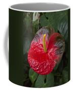 Anthurium Flamingo Flower Beauty Queen Fine Art Photography Print Coffee Mug