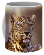 Arabian Leopard Panthera Pardus 1 Coffee Mug