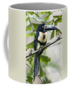 Aracari Coffee Mug
