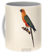 Aratinga Chrysocephalus  Coffee Mug