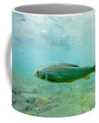 Arctic Grayling Or Thymallus Arcticus Underwater Coffee Mug