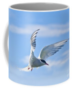 Arctic Tern Sterna Paradisaea In Flight Coffee Mug