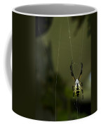 Argiope Aurantia Coffee Mug