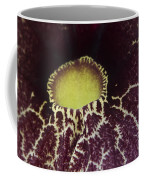Aristolochia - Dutchmans Pipe Coffee Mug