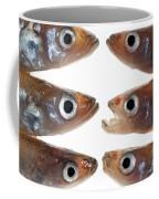 Arrangement Of Small Fish Smelt Coffee Mug