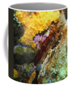 Arrow Crab In A Rainbow Of Coral Coffee Mug