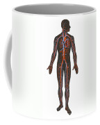Arteries And Veins Of The Human Body Coffee Mug
