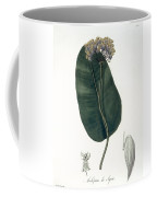 Asclepias Syriaca From Phytographie Coffee Mug