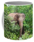 Asian Elephant  Elephas Maximus Coffee Mug