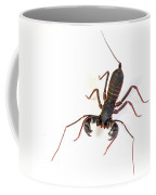 Asian Whipscorpion Coffee Mug