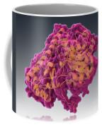 Aspartate Transaminase, Molecular Model Coffee Mug