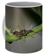 Assassin Bug Coffee Mug