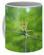 Assassin Bug Nymph - Reduviidae Coffee Mug