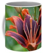 Auburn Edges Coffee Mug
