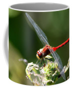 August Dragonfly  Coffee Mug