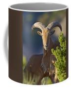 Auodad Ram On Watch Coffee Mug