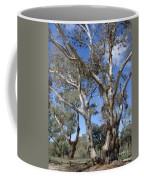 Australian Native Tree 12 Coffee Mug