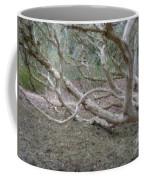Australian Native Tree 4 Coffee Mug