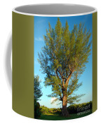 Australian Pine At Sundown Coffee Mug