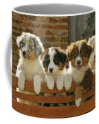 Australian Sheepdog Puppies Coffee Mug
