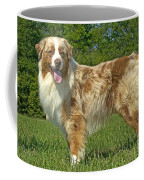 Australian Shepherd Dog Coffee Mug