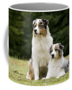 Australian Shepherd Dogs Coffee Mug