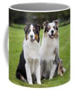 Australian Shepherds Coffee Mug