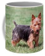 Australian Terrier Dog Coffee Mug